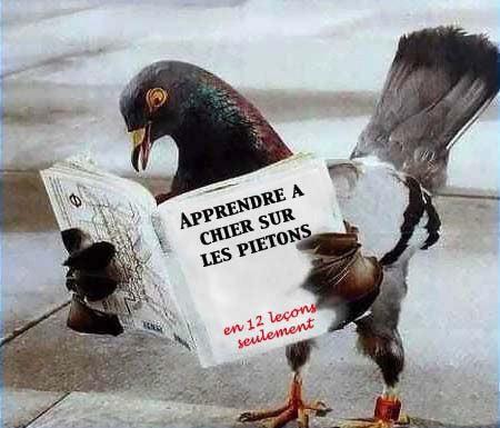 Les pigeons sont fans demoi